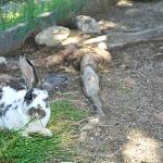Tiere der Leonardhütte am Maltaberg im Sommer