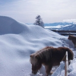 Tiere der Leonardhütte am Maltaberg im Winter